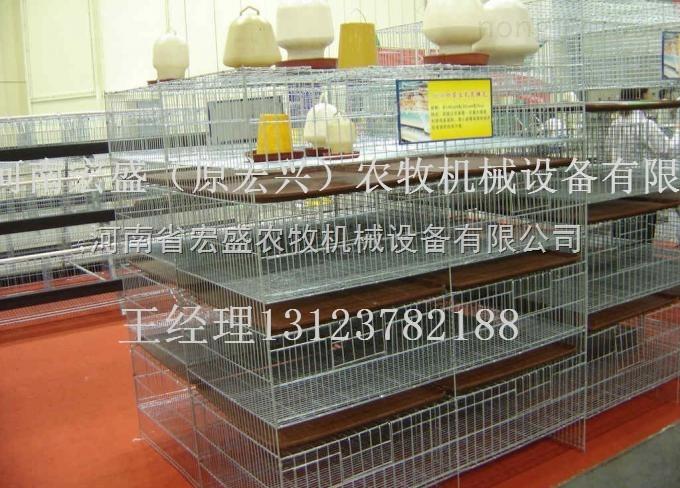 育雏笼-河南省宏盛育雏笼质优价廉立式养小鸡笼直销