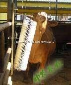 自动牛体刷