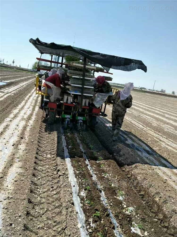 田耐爾玉米移栽機暢銷優質多行種植機寧津