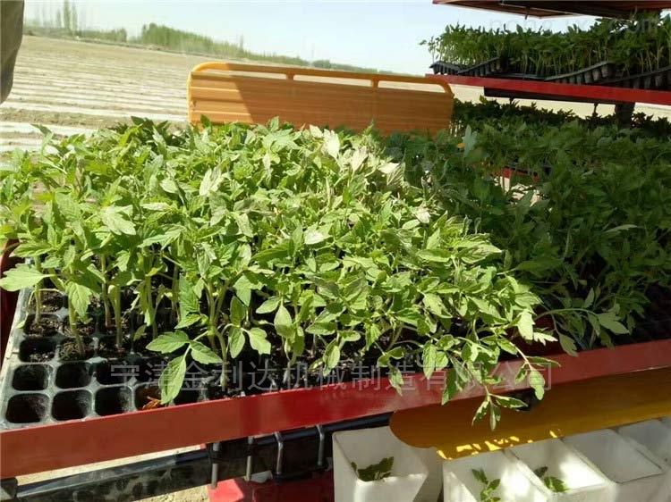 研发新款使用寿命长番茄移栽机宁津田耐尔