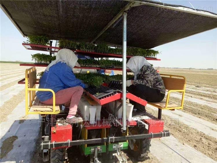 适合种植多种蔬菜多功能栽植机番茄移栽机