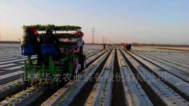 秧苗移栽机生产厂家价格