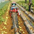手扶式土豆收获机 地瓜马铃薯收货机