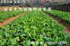 深圳行距可调的生菜播种机 大棚种植精播机