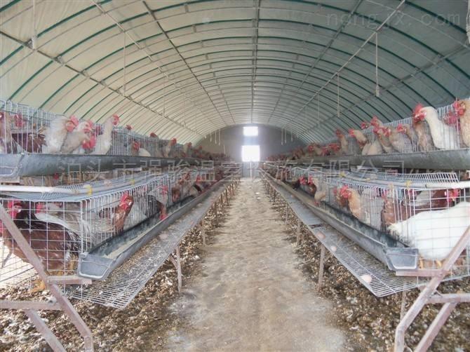 雞鴨鵝牛羊豬養殖大棚強駿建造