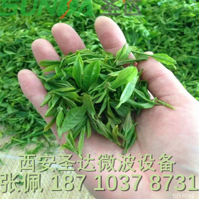 茶叶杀青干燥设备 绿茶杀青机 干燥机