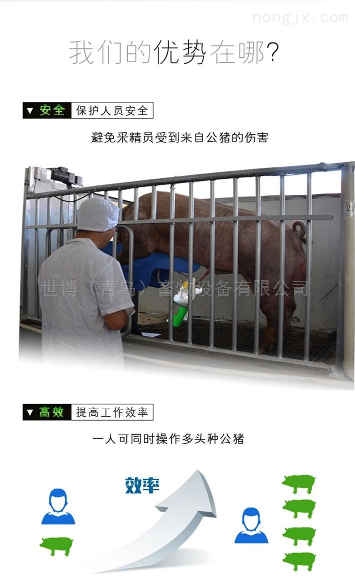 桦甸自动采精系统,猪人工授精专家