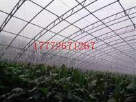 专业生产镀锌双膜骨架蔬菜温室大棚