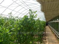 暖棚温室物联网�改造厂家