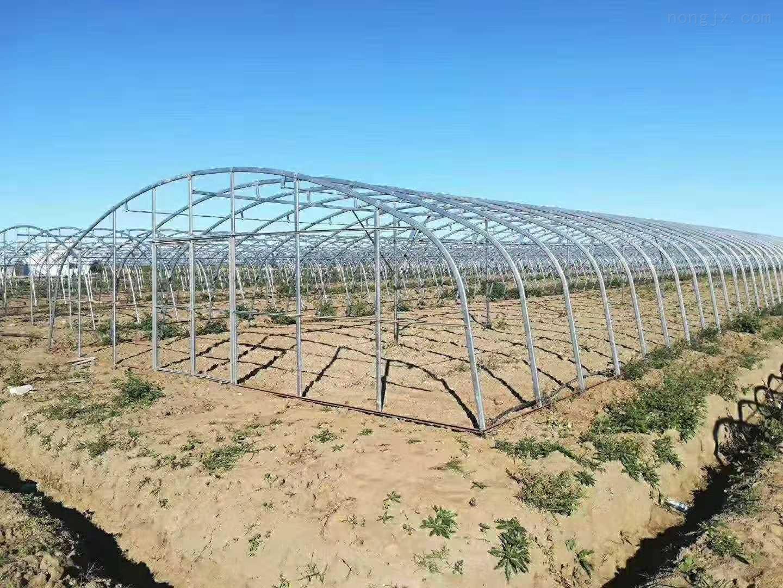 加工鍍鋅帶橢圓管骨架養殖大棚的造價架成本