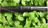 山东润星蔬菜微喷带