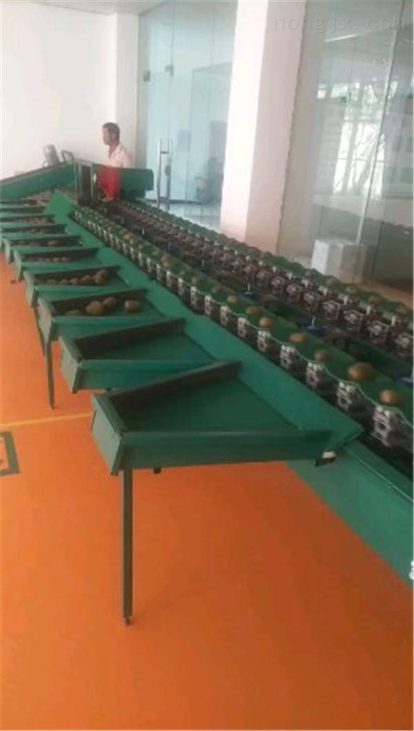 先進型號的蜜桔選果機電商專用的柑橘分選機