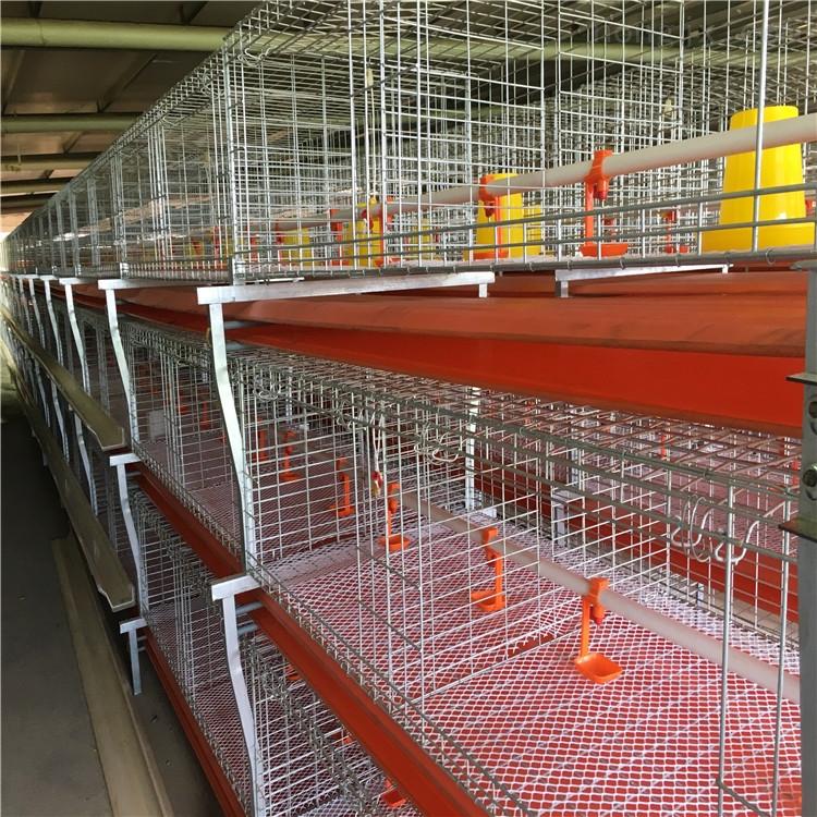 肉鸡笼养设备山东鸡笼厂家批发成品鸡笼设备