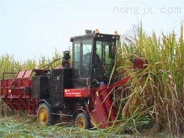 4GZ-GZ180型甘蔗联合收割机