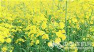 农业农村部办公厅关于印发《2019年种植业工作要点》农办农[2019]1号的通知